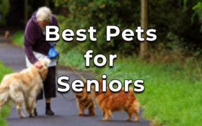 Best Pets for Seniors – A Detailed List