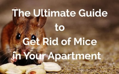 The Ultimate Guide to Get Rid of Mice in Your Apartment Fast [2020]
