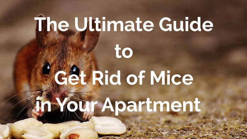 The ultimate guide to get rid of mice in your apartment