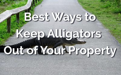 How to Keep Alligators Out of Your Yard and Pool [All the Best Methods]