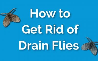 How to Get Rid of Drain Flies Fast and For Good – A Step-by-Step Guide
