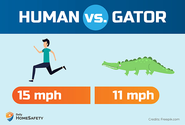 Can you outrun an alligator