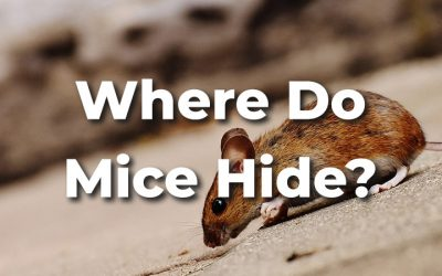 Where Do Mice Hide In a House? [+Tricks to Find Them]