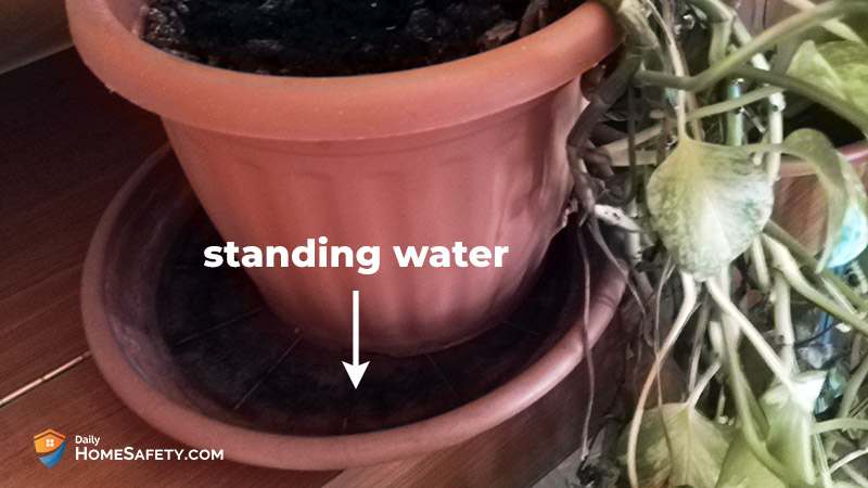 Standing water with larvae