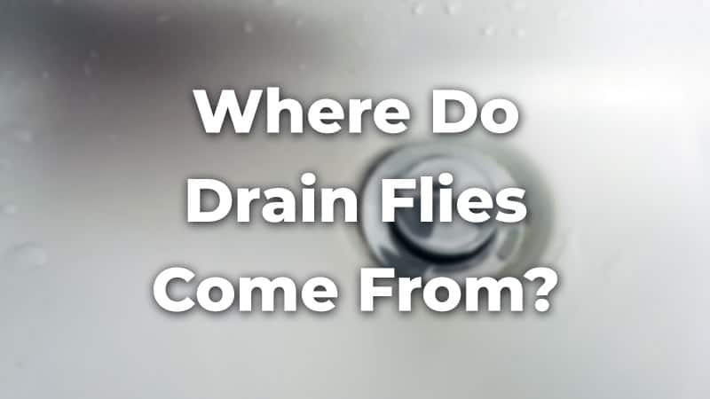 Where Do Drain Flies Come From? 3 Simple Methods to Find Them All